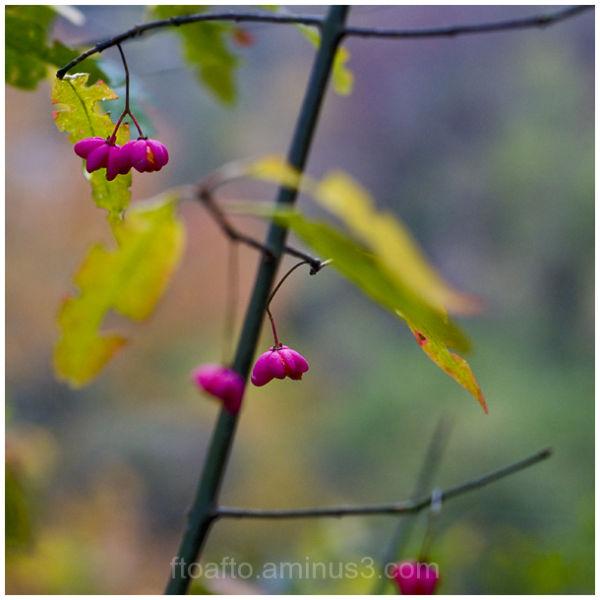 Flores de otoño / Autumn flowers
