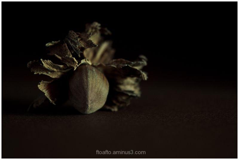 Avella / Hazelnut