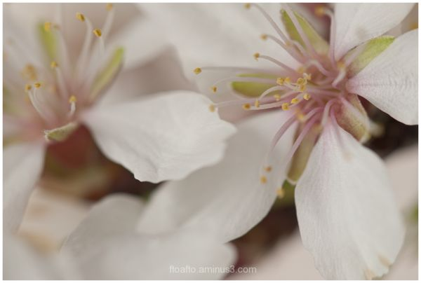 LLega la primavera / Spring is coming