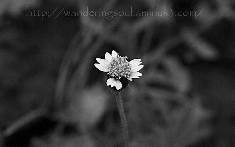 Beauty in monochrome
