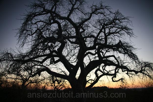 Amazing tree.