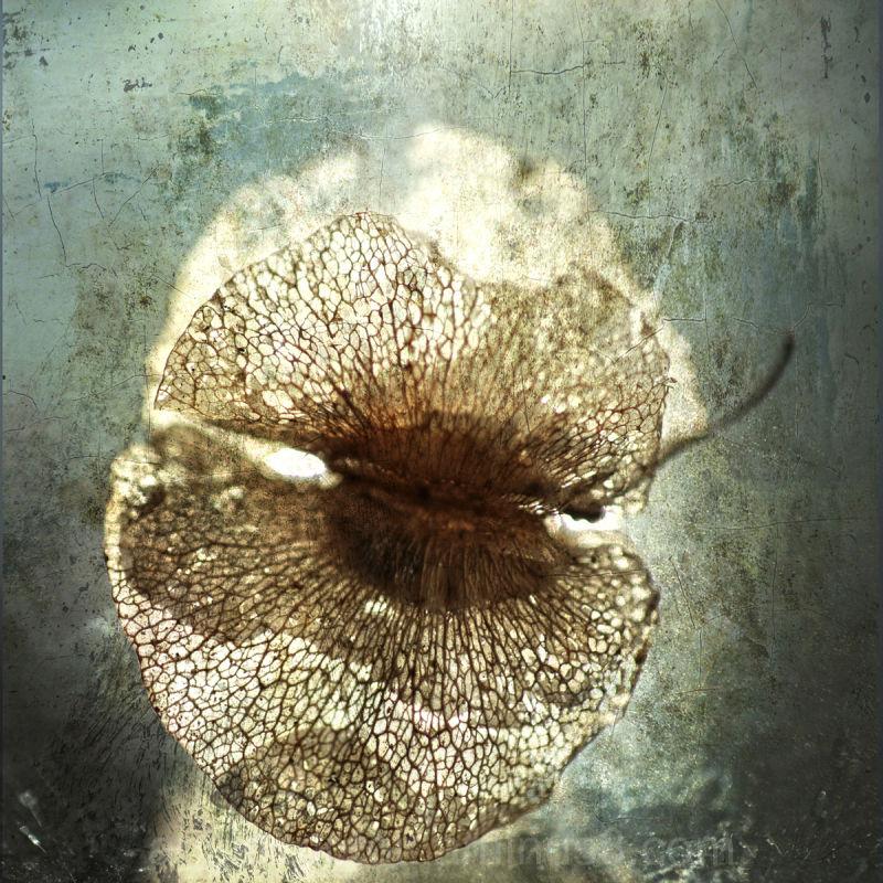 Seed 2
