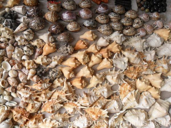 shells......