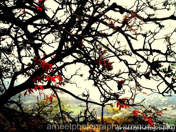 tree......