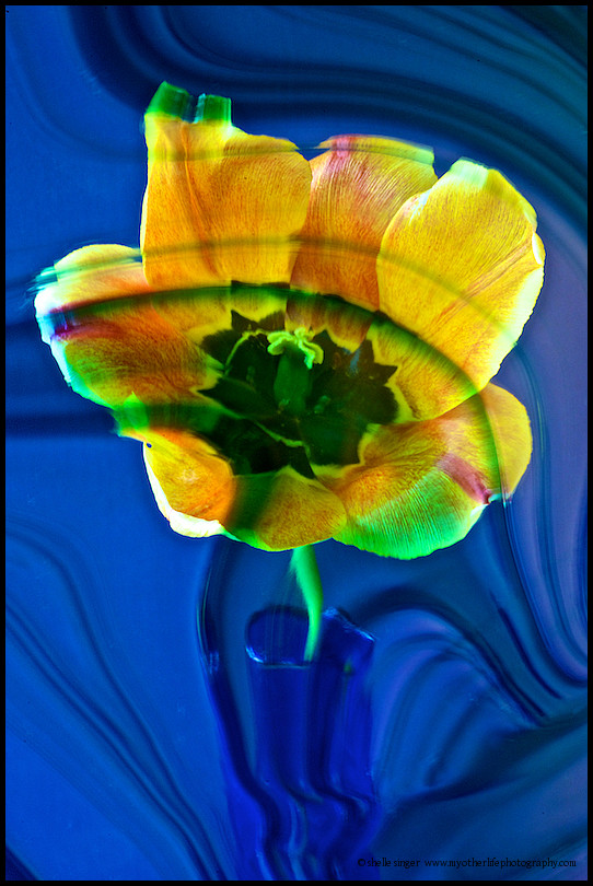 Yellow Flower with Stained Glass