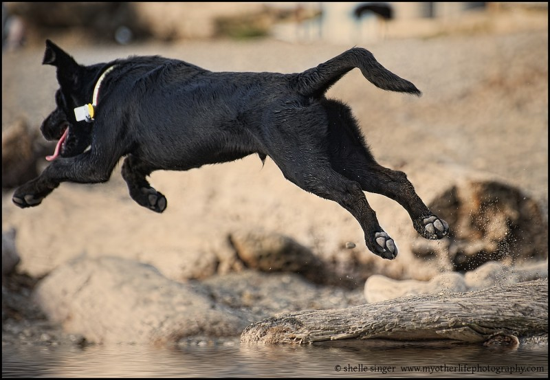 Puppy Leap