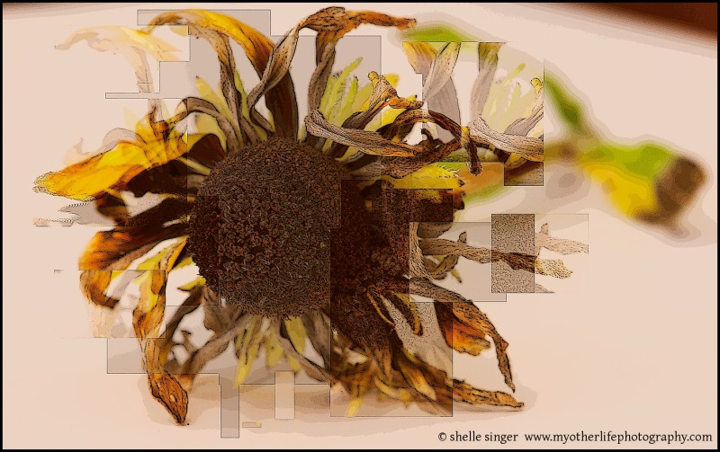 Black-Eyed Susan with a Twist
