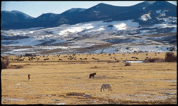 Horses in the Colorado Rockies
