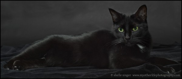 black cat laying on black velvet