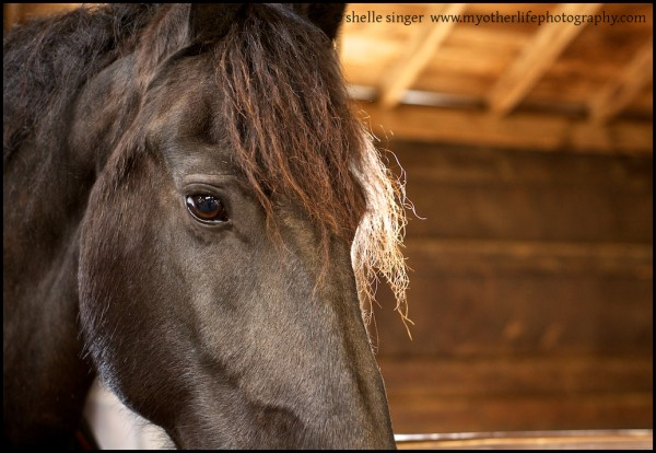 horse portrait in barn