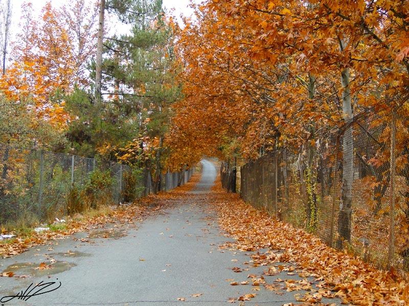 پاییز1