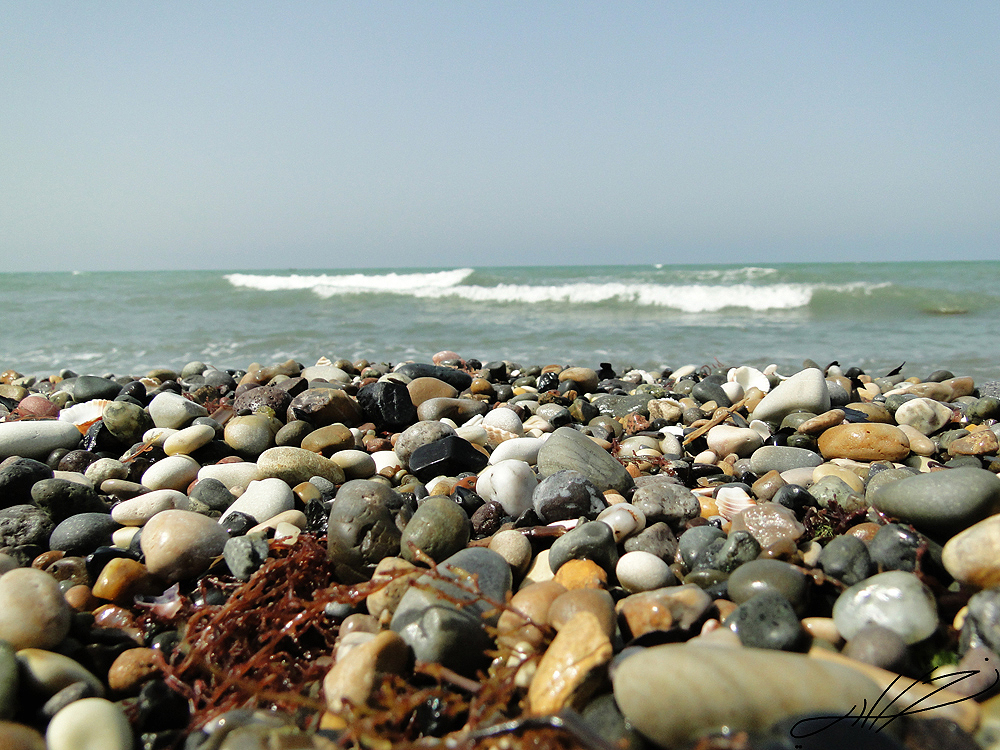ساحل ریگ
