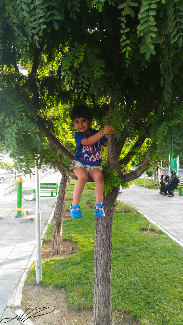 up on tree
