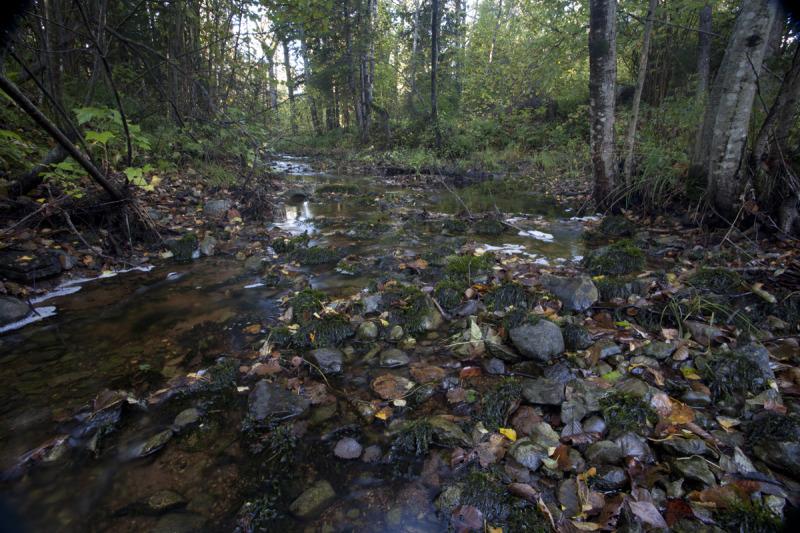 Sügisene jõgi.