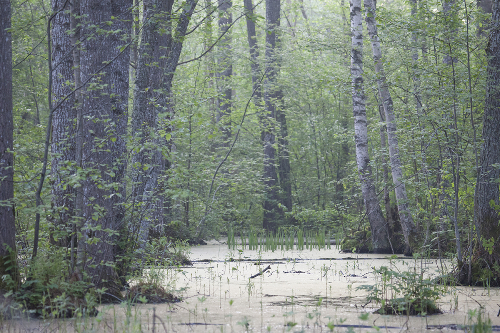 Vesine mets.