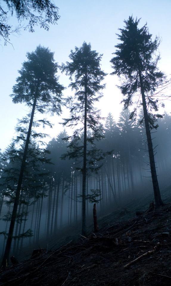 Martinske, hole, Slovakia, three, 3, tree, fog