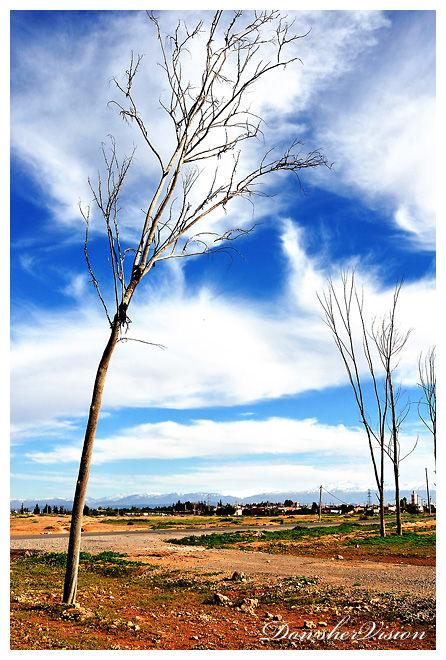 Palmeraie sans Palmiers