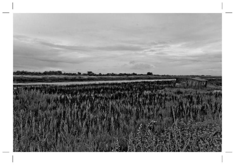 Mon ile de Ré : Les marais