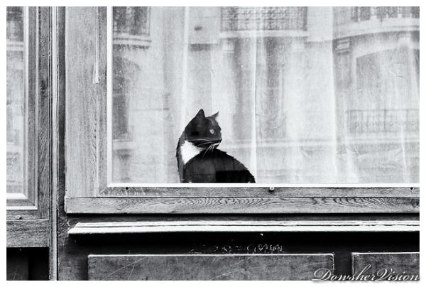 Trankil le Chat (2)