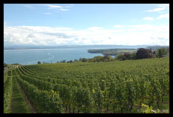 Vue sur les vignes et le lac