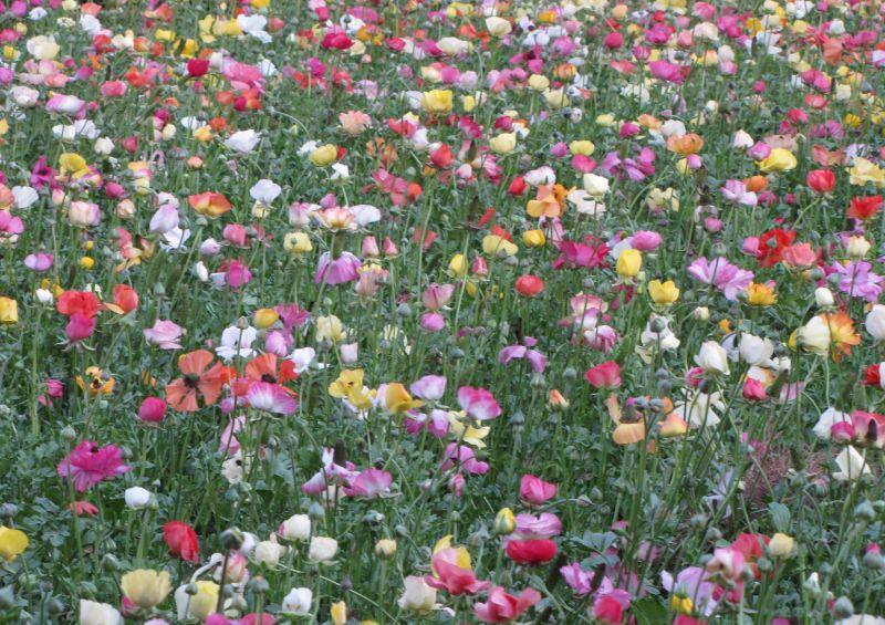 Flower farm , ...