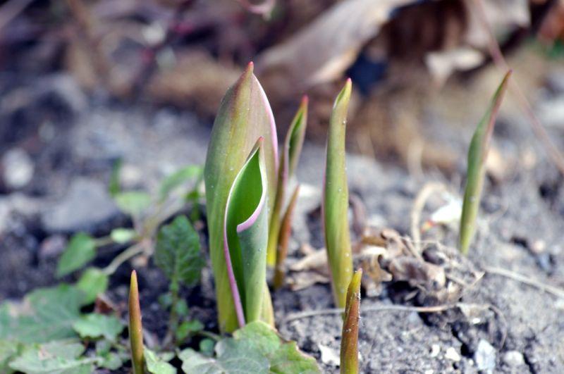 A few flowers beginning to break through the soil