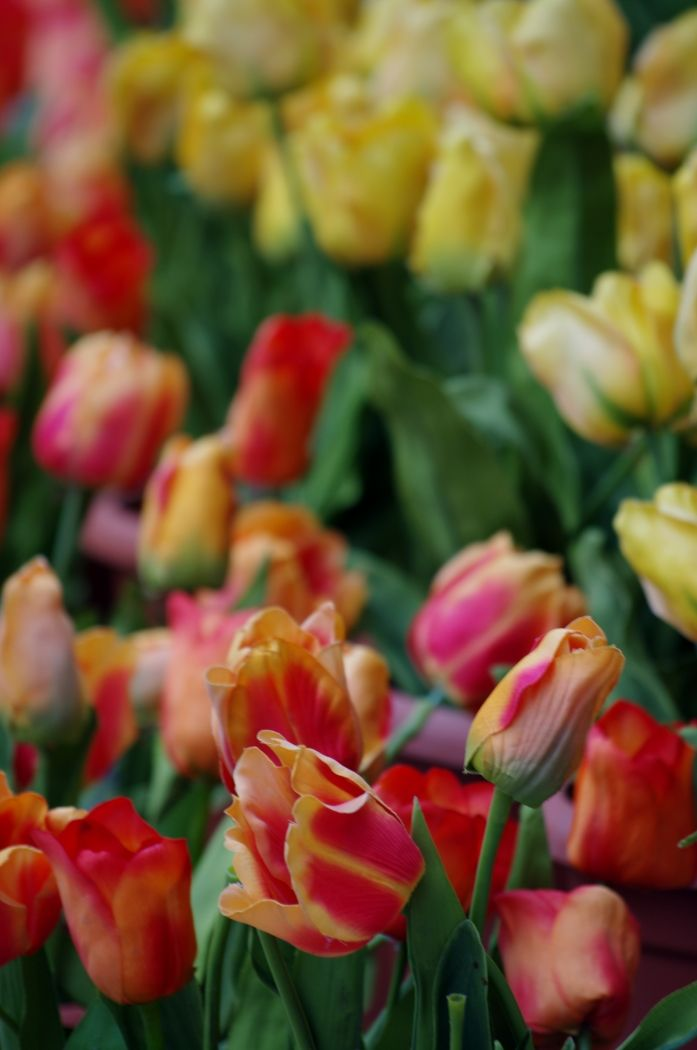 A whole bunch of tulips outside a restaurant