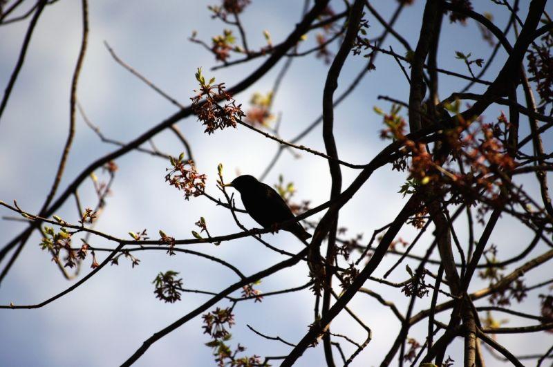 Birding around