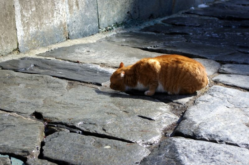 A cat drinks some water inside a monastery
