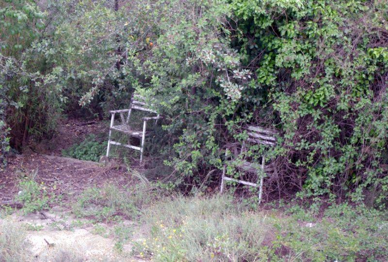 Chair orange trees