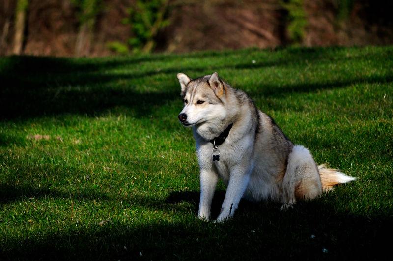 Dog zurich