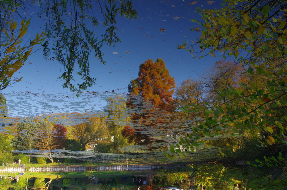 Les étangs de Corot (Ville d'Avray, France)