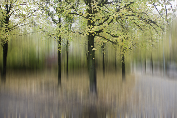 Blurred trees 2