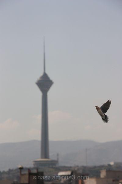 Fly ...!