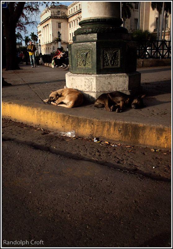 Strays, Cuba