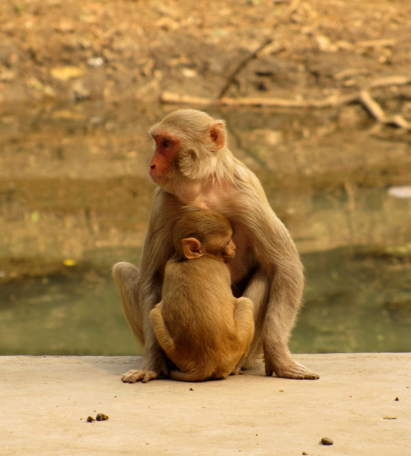Mother and kid