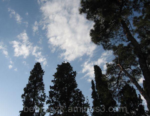 پیوند آسمان و درخت