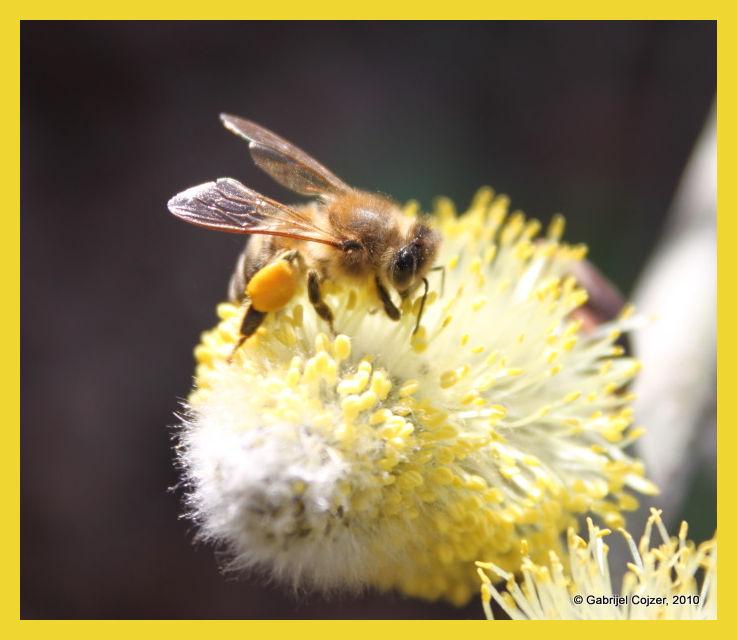 Busy bee...bzzzzzz