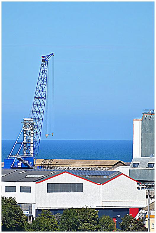 Girafe de mer