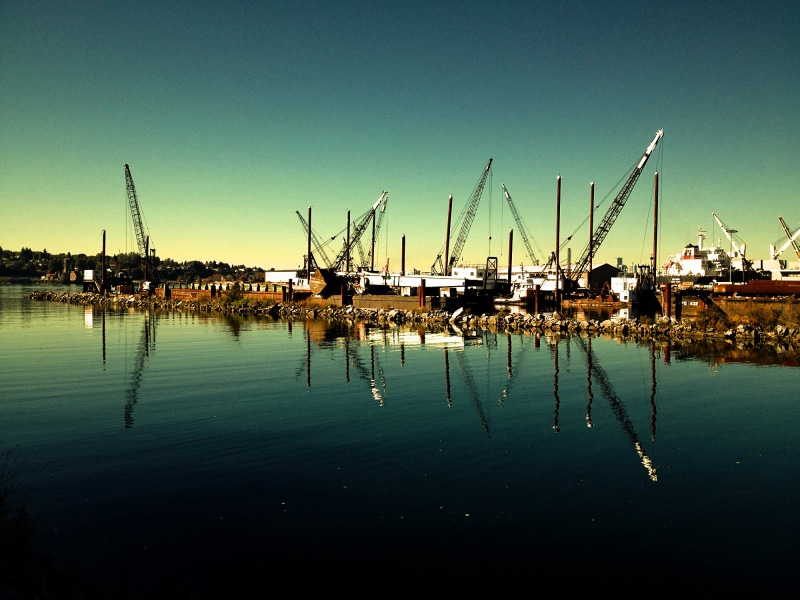 view from river of cranes