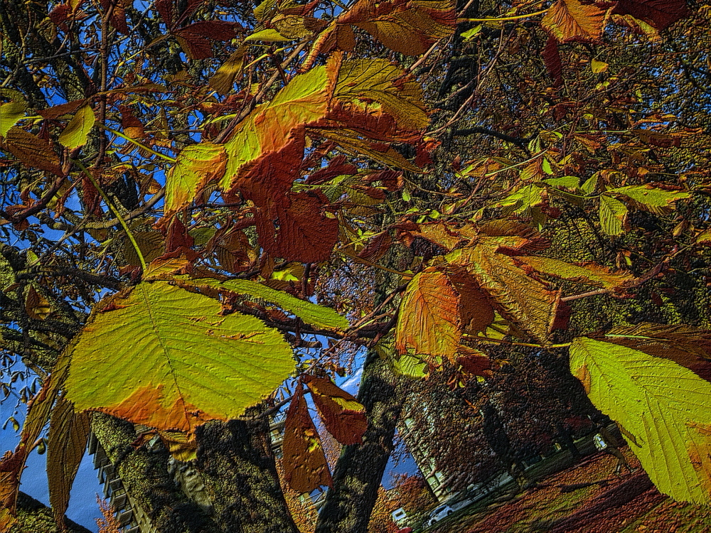 chestnut in fall