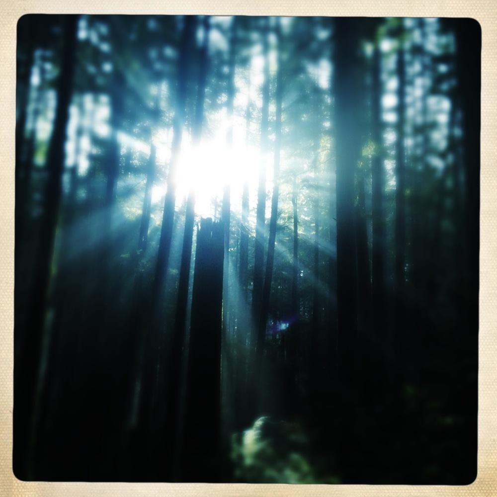light through trees along bridal path