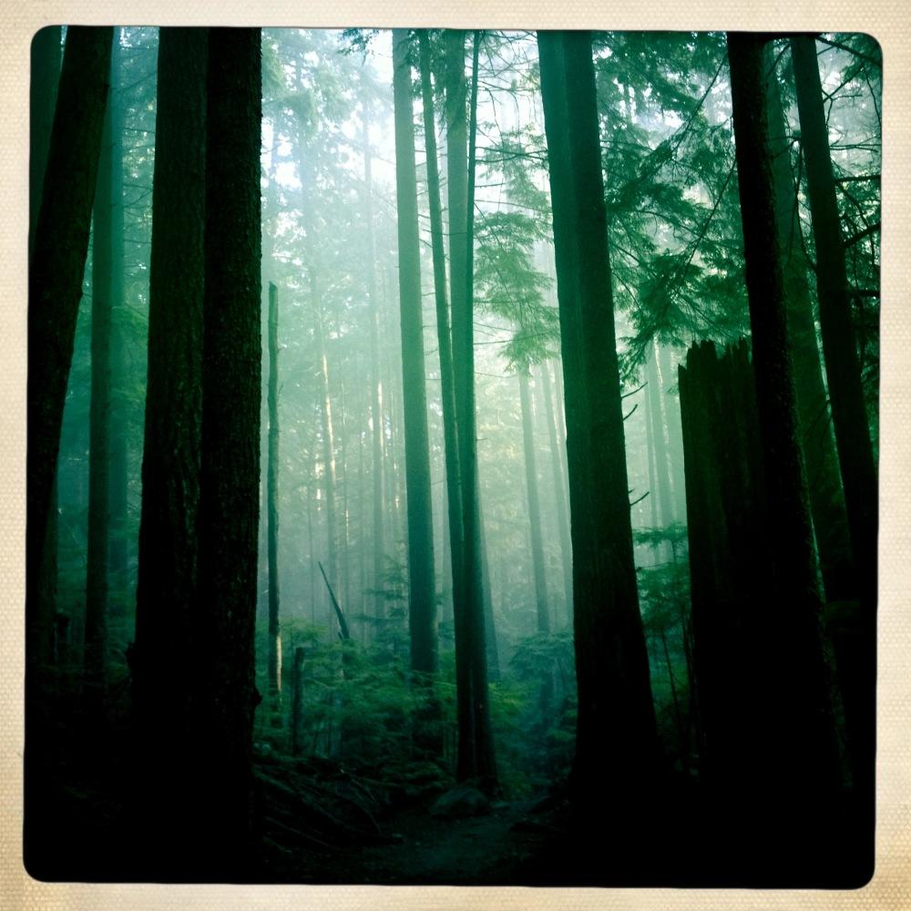 bridal path forest