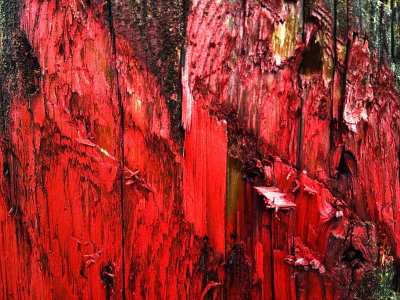 paint on a telephone pole