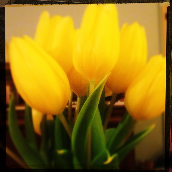 yellow tulip bunch