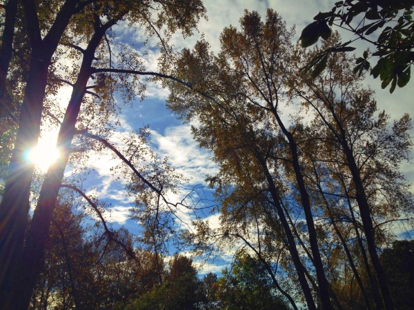 Trees and sun and sky