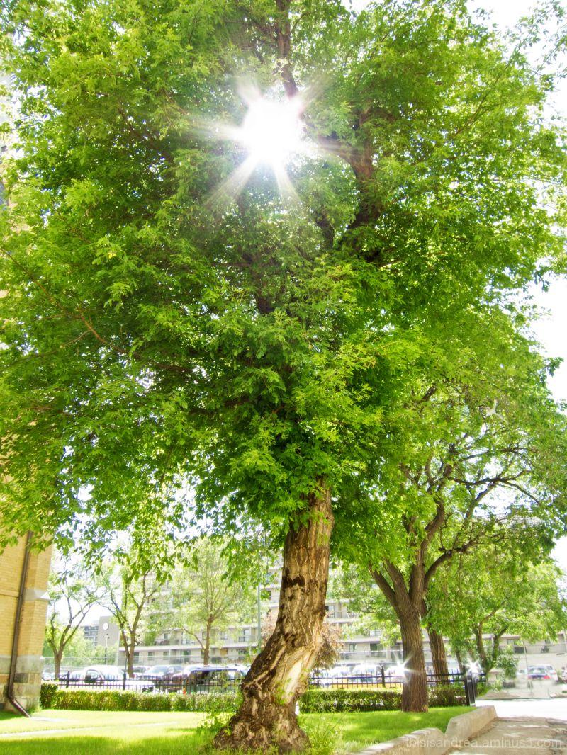 Tree portrait