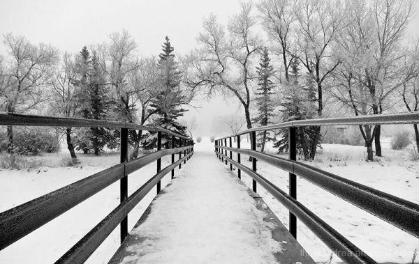 Walking into winter