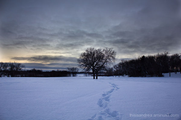 Winter rhapsody I