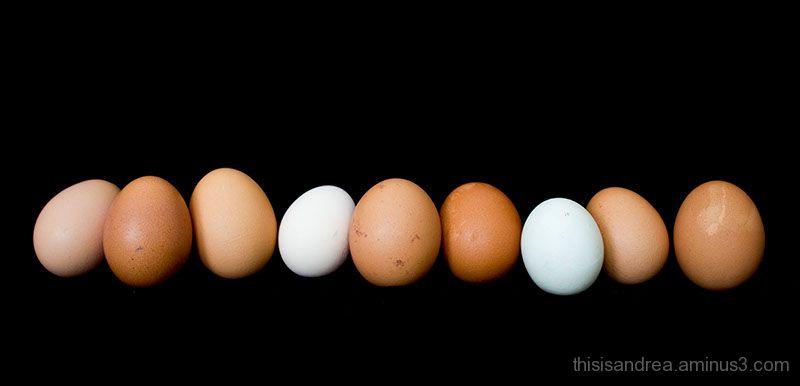 Egg row